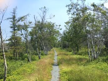 Corea NWR - Black spruce bog