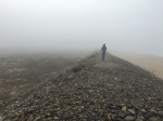 Pacific Golden-Plover search in the fog